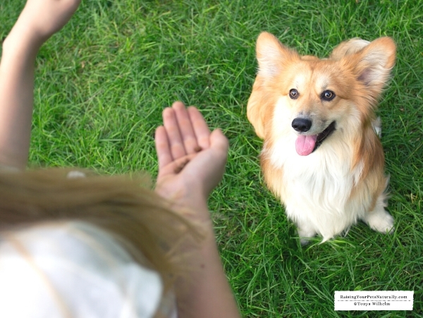 Positive training for a nervous dog