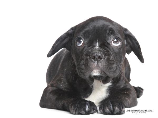 Training a fearful puppy