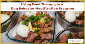 Using Food Therapy in a Dog Behavior Modification Program | The Role of Food in a Dog's Behavior (Early access for our Patreon community)