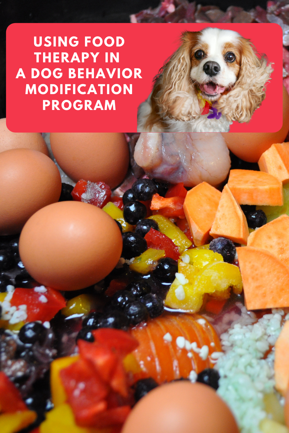 Using Food Therapy in a Dog Behavior Modification Program   The Role of Food in a Dog\'s Behavior (Early access for our Patreon community)