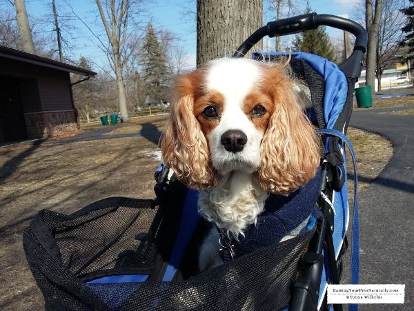 How to live with a disabled dog