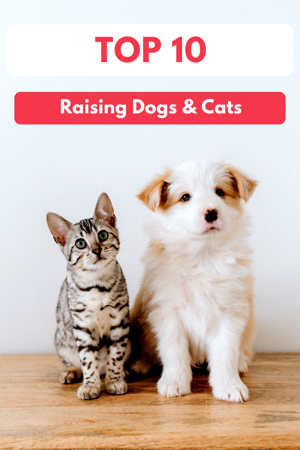 Top 10 Tips for Raising Dogs and Cats Together   Dogs and Cats Living Together in Harmony (Early access for our Patreon community)