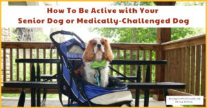 How To Be Active with Your Senior Dog or Medically-Challenged Dog (Early access for our Patreon community)