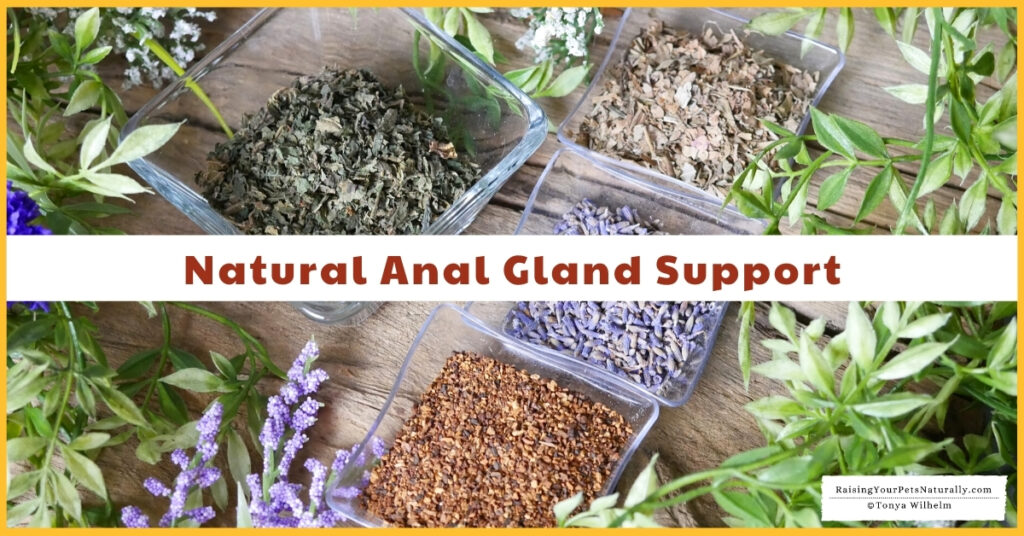 How to naturally express anal glands