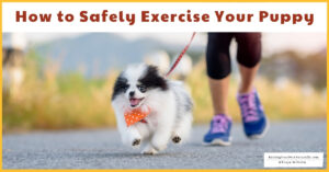 How to Safely Exercise Your Puppy | How Much Exercise Does a Puppy Need (Early access for our Patreon community)