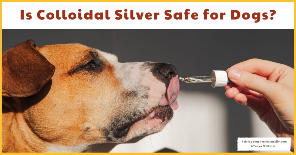 Should you give your dog silver