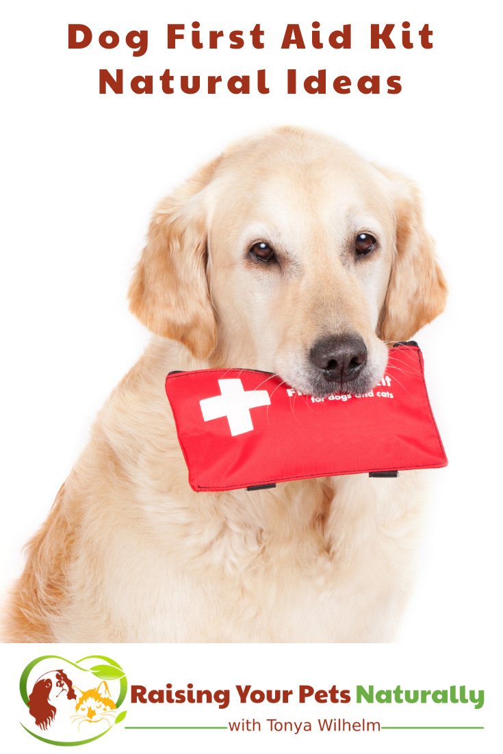 Dog First Aid Kit Ideas   Natural Dog Emergency Kit Remedies and Ideas  (Early access for our Patreon community)