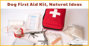 Dog First Aid Kit Ideas | Natural Dog Emergency Kit Remedies and Ideas  (Early access for our Patreon community)