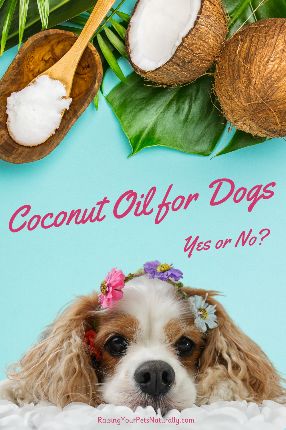 Benefits and Risks of Coconut Oil for Dogs | Is Coconut Oil Good for Dogs? (Early access for our Patreon community)