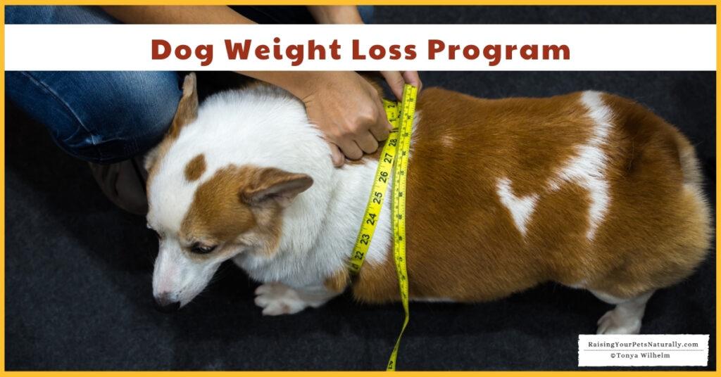 Best dog diet