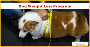Dog Weight Loss | Best Dog Food for Weight Loss (Early access for our Patreon community)