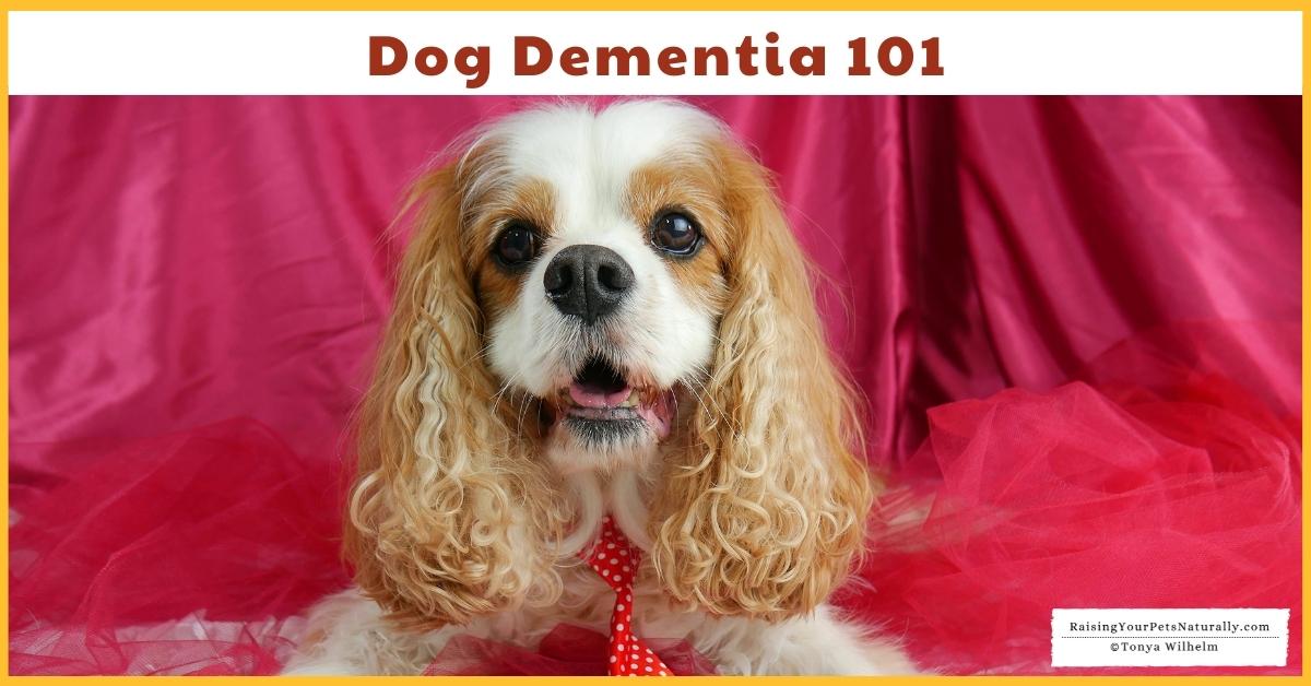 Dog dementia treatment