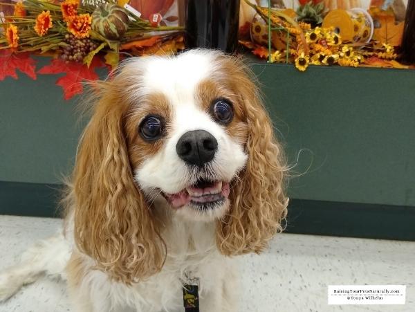 Caring for a senior dog