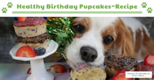 Dog Cake That's Safe and Healthy | Dexter's 12th Birthday Homemade Pupcakes (Early access for our Patreon community)
