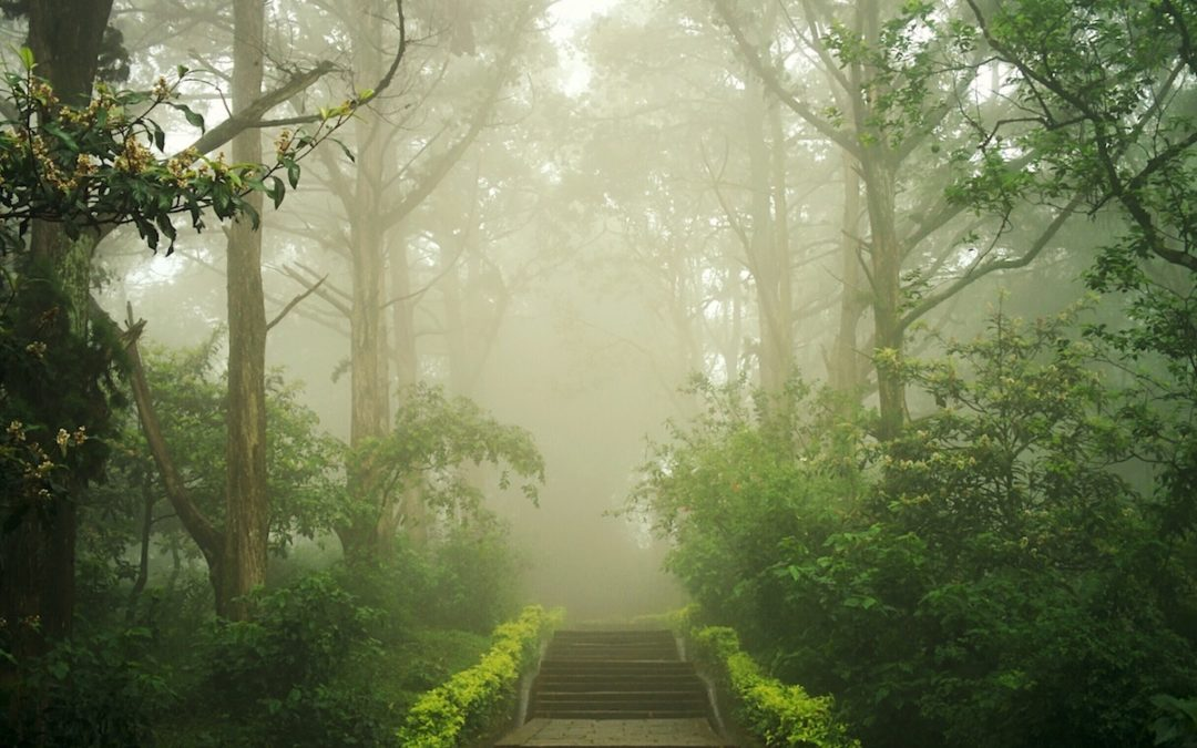 Misty path in the forest