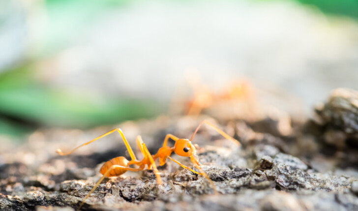 Ant in the small world