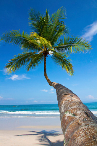 Bali-Palm