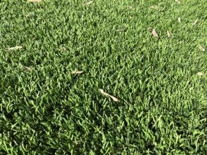 walnut creek california artificial grass
