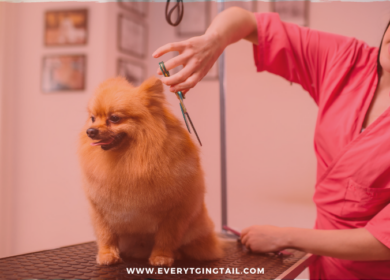 How Grooming is Vital to Keep Your Pet Healthy?