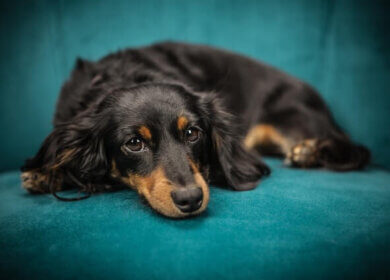 Is your dog suffering from Diarrhea? Know what to do.
