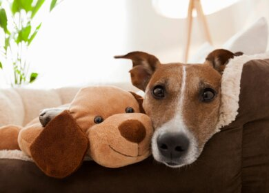 Accessories That Can Make Your Dog Happy