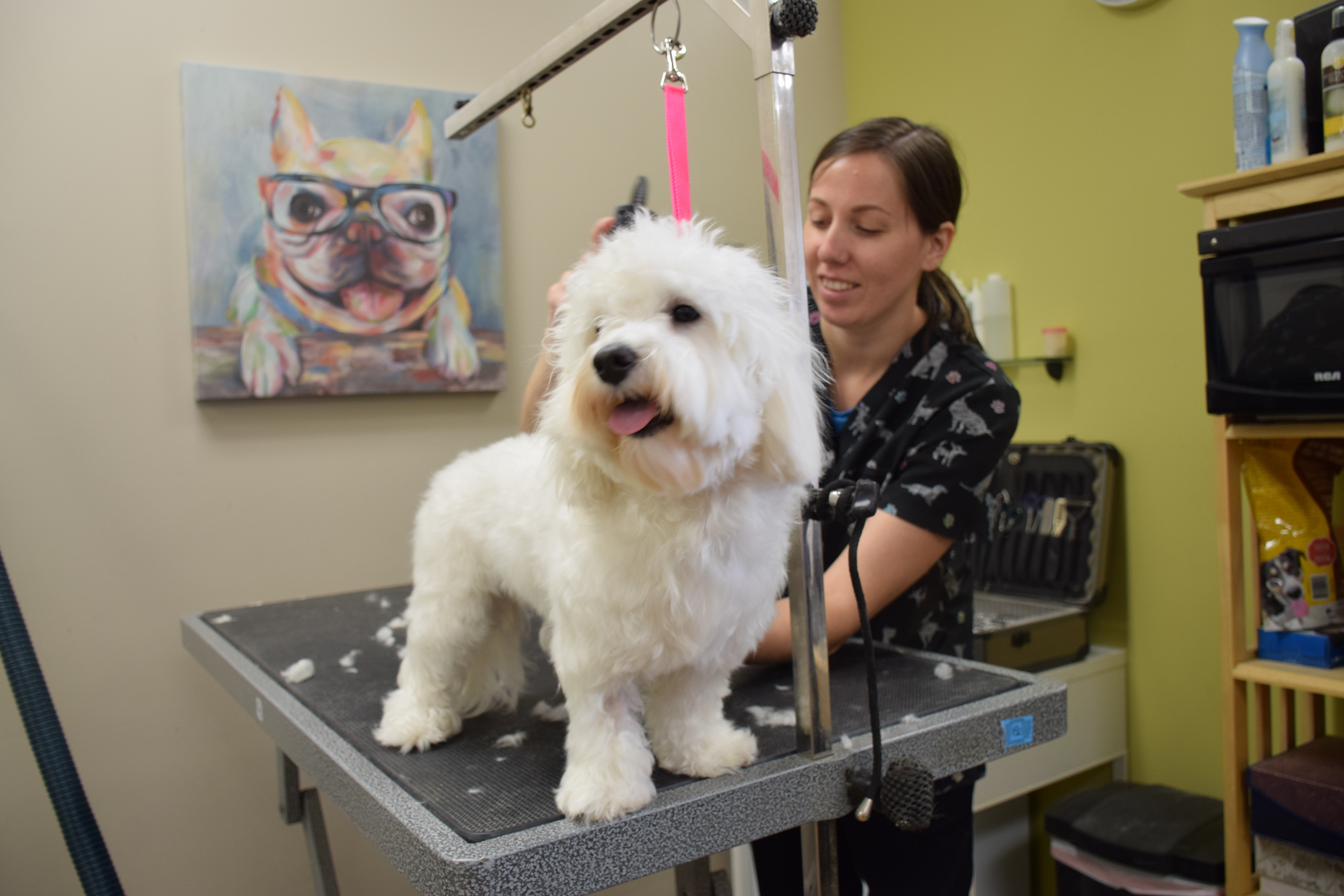 Uptown Pet Grooming groomer Chelsey Blundon with client Bella