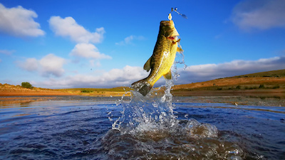 Best Bass Fishing Rod