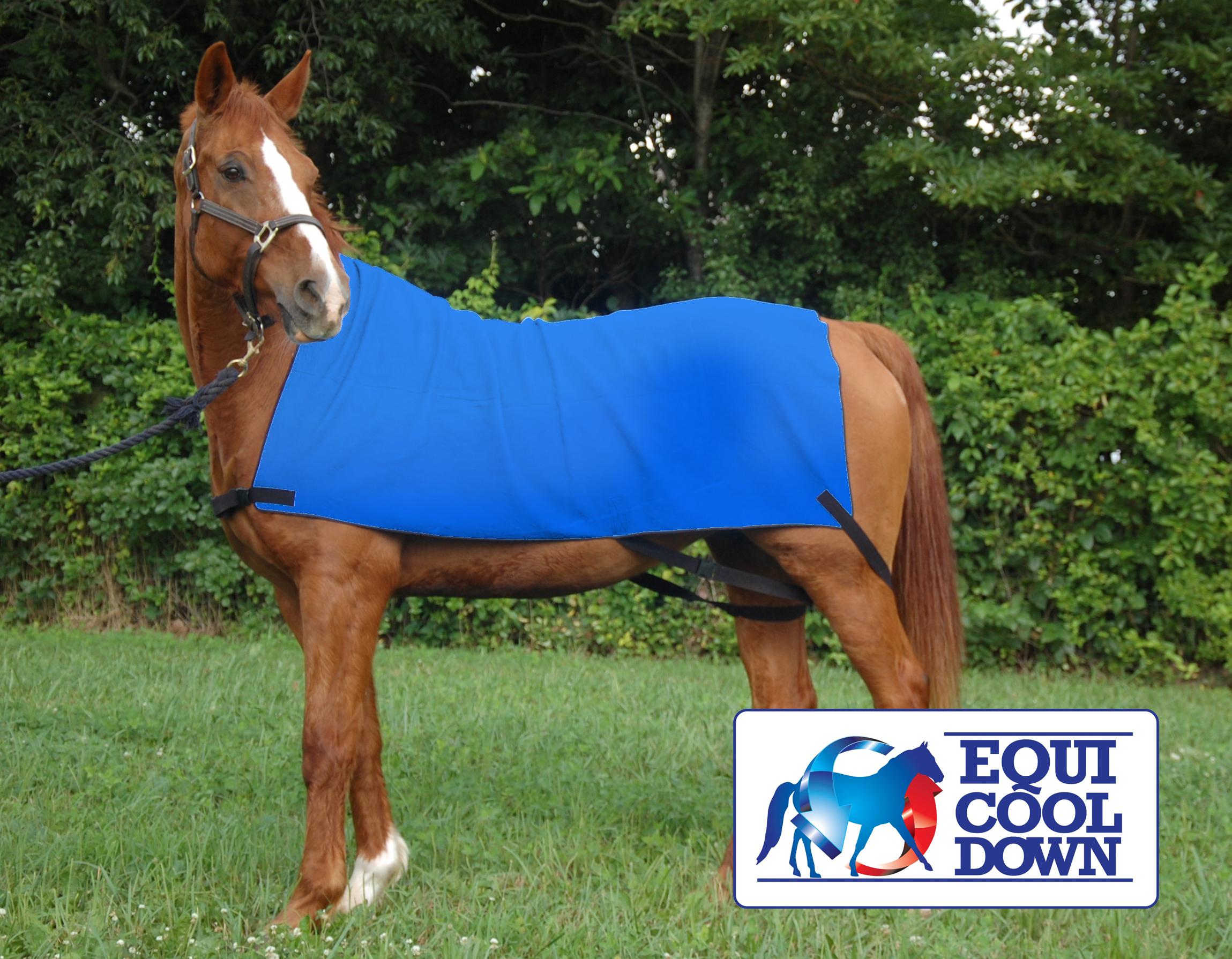 Equine Body Wrap