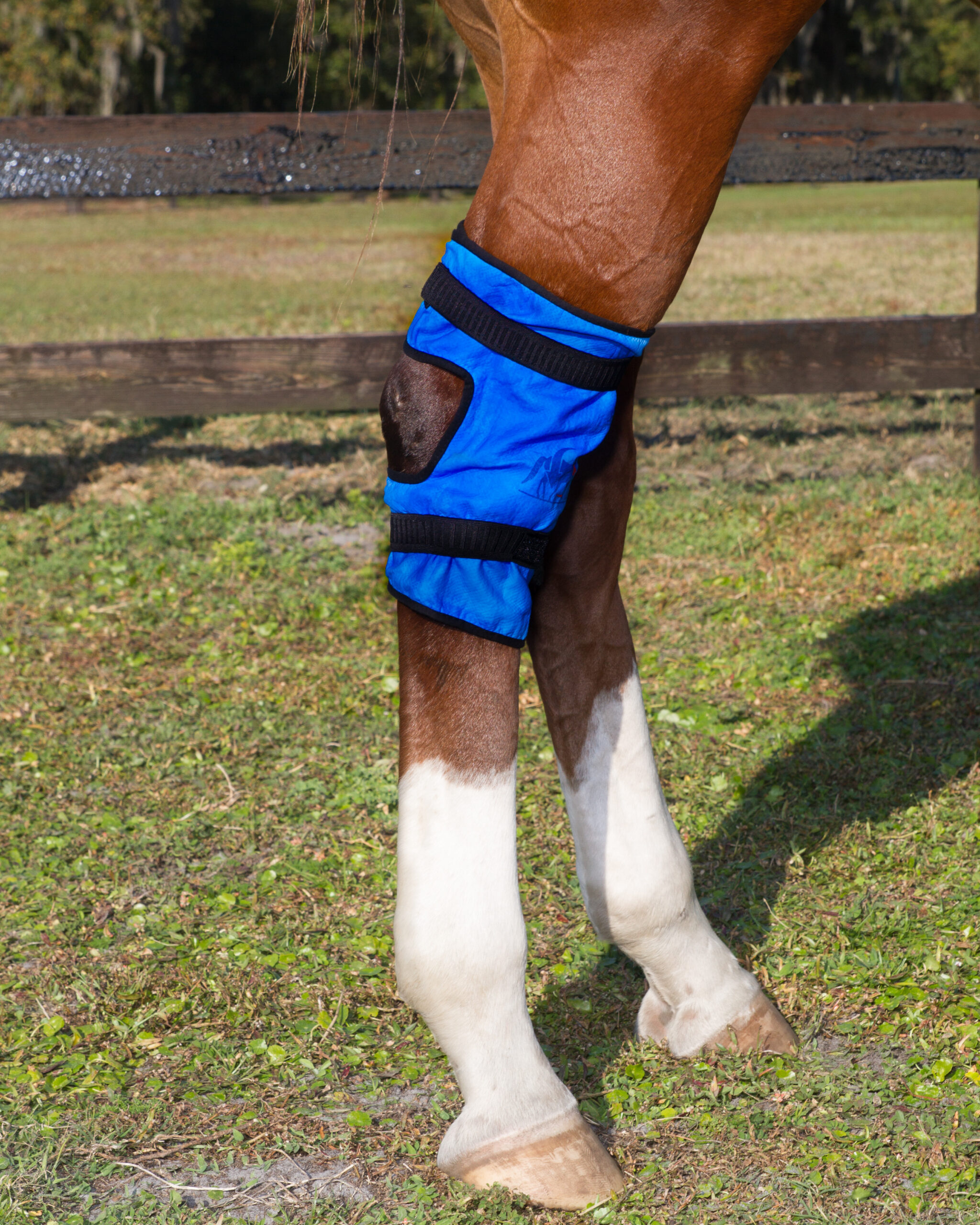 Equine Hock Wraps (2 per package)