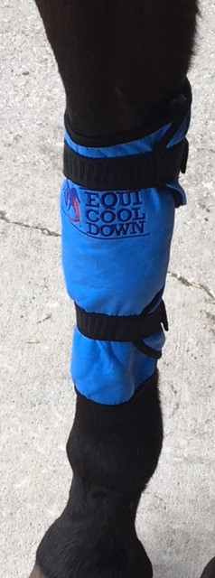 Equine Knee Wraps (2 per package)