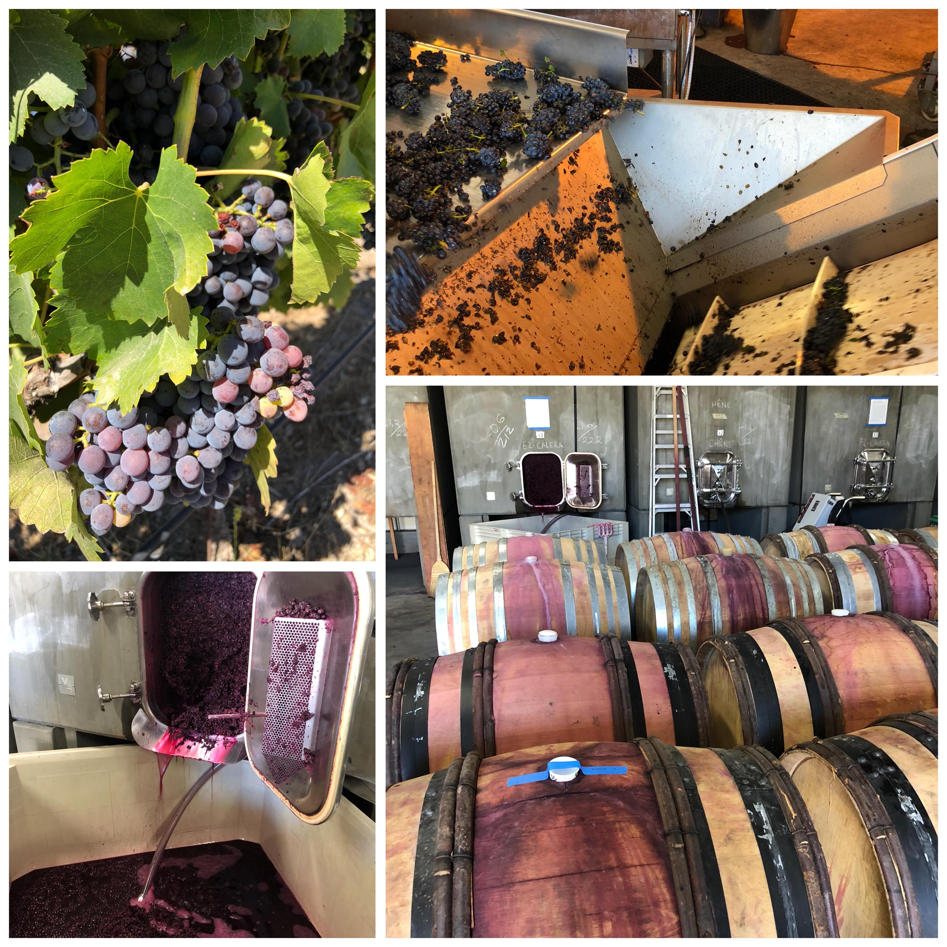 #harvest #pinotnoir #winetour #winetasting