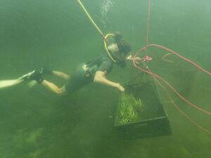 diver, grass, sea grass