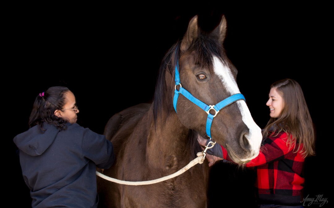 What is Equine Assisted Mental Health?