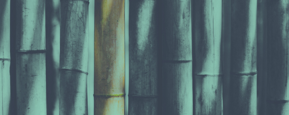bambooheader