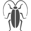 image of coackroach