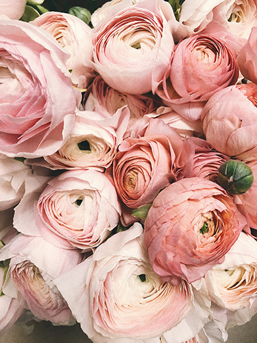 Coral and Blush Peonies