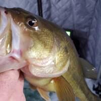 George Wells Fishing Trips Baby Lake