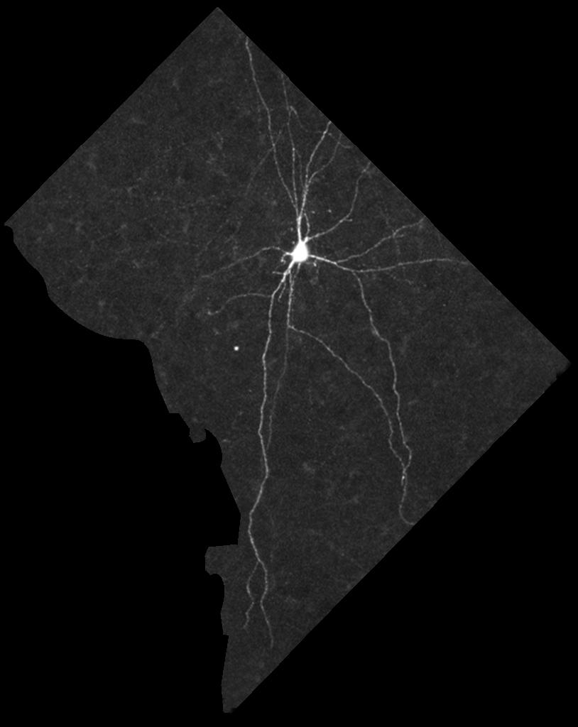 Neuron on a map of Washington DC