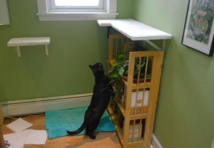 Upstairs Cat Platforms – Part 3