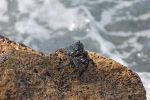 big island hawaii crab