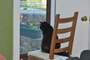 bonkers sitting chair screen door back yard
