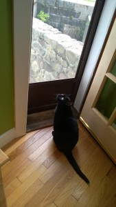 darwin checking out the new french door leading from living room to yard