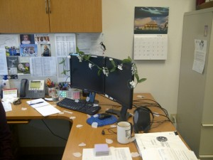 my office decorated for my wedding by my coworkers