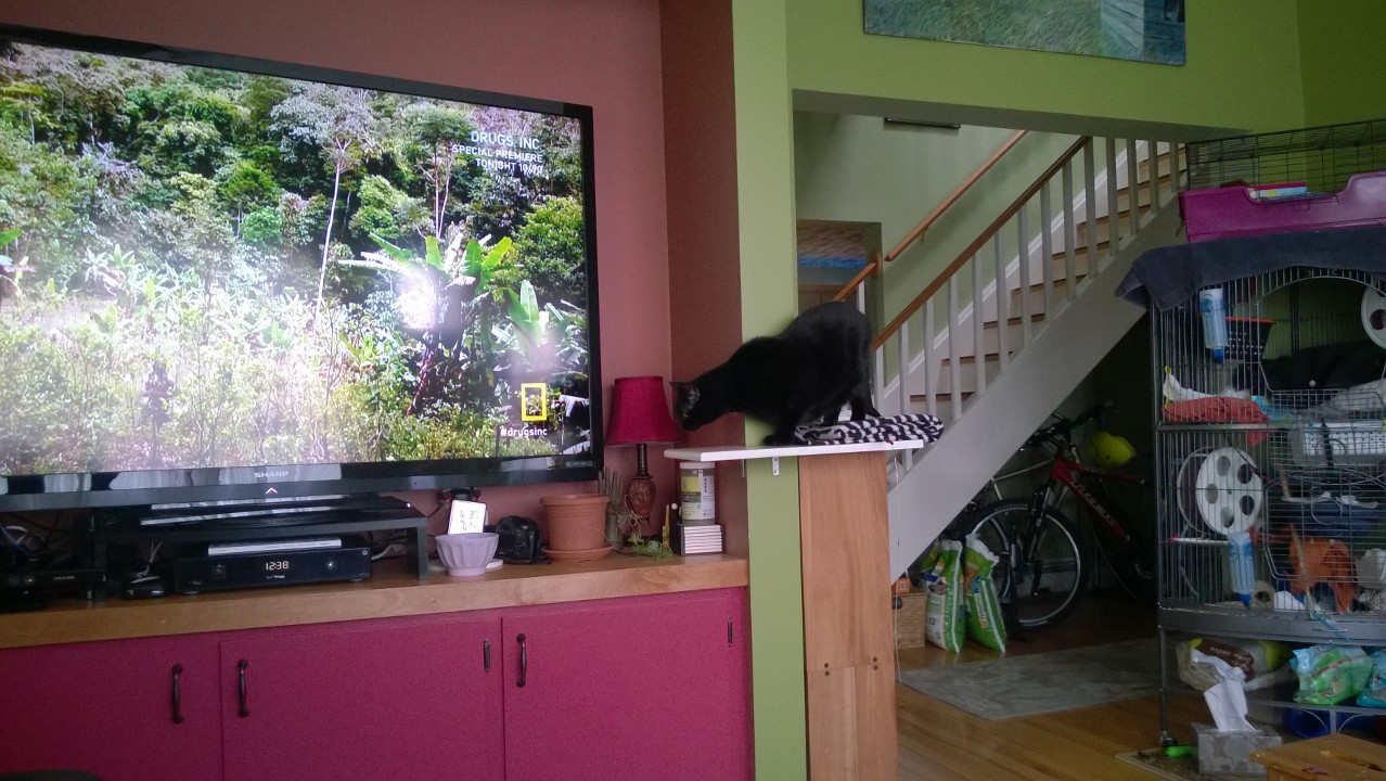 Downstairs Cat Platforms – Part 4