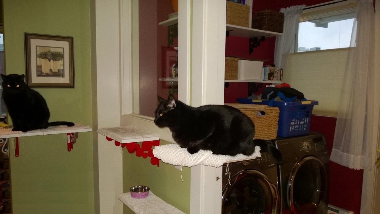 Downstairs Cat Platforms – Part 5