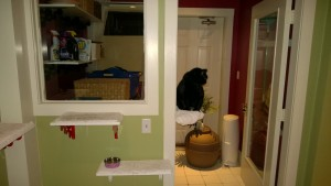 laundry room expansion of downstairs hall cat platforms