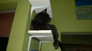 darwin checking out the new living room and downstairs hall cat platforms