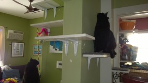 birdie and darwin hanging out on the downstairs hall and living room cat platforms