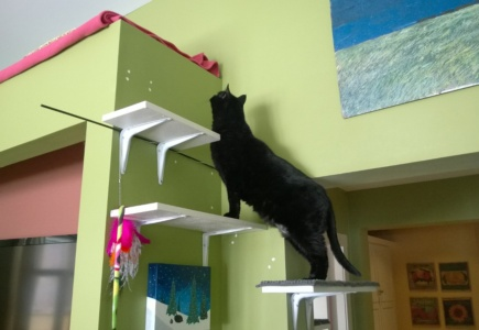 Cats in the Alcove – Part 6