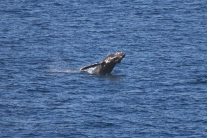 celebrity infinity panama canal cruise april 2013 cabo san lucas humpback whale